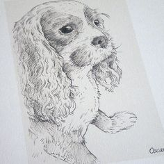 Pet Portrait Sketch of a cavalier king charles spaniel Portrait Sketches, Pencil Portrait, King Charles Spaniel, Cavalier King Charles, Thank You Presents, Childrens Gifts, Pet Names, Pet Portraits, Artsy Fartsy