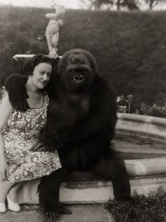 1940    From National Geographic: Mrs. E. Kenneth Hoyt, of Havana, Cuba, acquired the gorilla in 1932 when he was three months old. Mr. Hoyt had just shot Toto's father in the French Congo. African villagers, without the knowledge of the Hoyts, then killed the mother. Mrs. Hoyt, unwilling to see the baby die, procured an African nurse for the gorilla and he thrived on human milk.