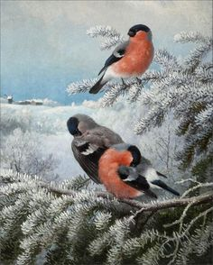 Ferdinand Henricsson von Wright (1822-1906) — Bullfinches, 1890   (616×768) Wright Brothers, Bullfinch, Altered Tins, Ferdinand, Bird Art, Finland, Birds, Animals, Painting