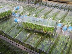 info regarding tissue culture , home flasking and seed propogating orchids by experienced bio technologists I'm not knowledgeable of flasking.
