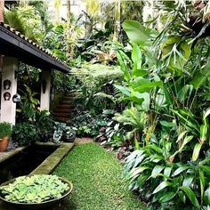 9 Surprising Useful Tips: Backyard Garden House Stepping Stones diy backyard garden solar lights.Backyard Garden On A Budget House backyard garden layout ideas. Tropical Garden Design, Backyard Garden Design, Tropical Landscaping, Garden Landscaping, Tropical Style, Landscaping Ideas, Tropical Gardens, Large Backyard, Patio Ideas