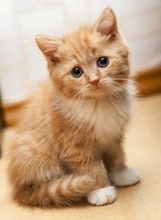 So cute! Pretty eyes.