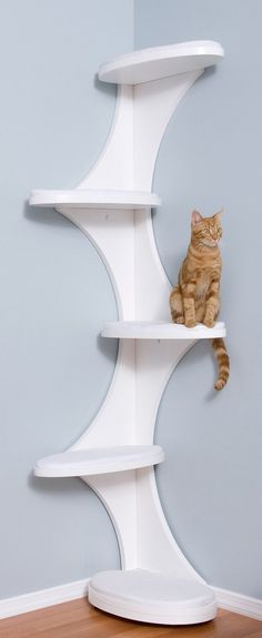 Modern, contemporary cat tree. Blends into any room – it looks like a bookshelf! DIY this cat tree with an actual bookshelf, but cover shelves with fabric to save shelves and provide traction for paws.