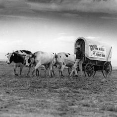 Covered wagon promoting Pikes Peak Farmers Union, Caption on wagon canvas reads, Organize Pikes Peak or Bust. There ain't no more homesteads. This is Join the Farmers Union. Historical Fiction Books, Historical Photos, Colorado Mountains, Rocky Mountains, Colorado State University, Covered Wagon, Pikes Peak, Happy Trails, Poster Pictures