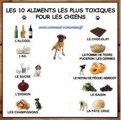 All your questions about natural dog food answered. Funny Animal Pictures, Dog Pictures, Toxic Foods For Dogs, Natural Dog Food, Homemade Dog Food, Dog Behavior, Diy Stuffed Animals, Dog Accessories, My Animal