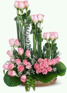 Preciosas Rosa