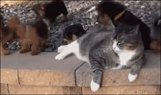 28 Gifs Of Cats Just Being Cute | CutesyPooh