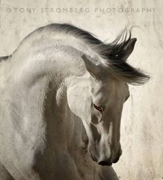 Clean & Shadowed Grey I have a love of this majestic creature & how this amazing photographer captures them: Tony Stromberg Photography