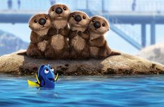 Exclusive wallpapers in HD for Finding Dory (Finding Nemo in wide, vertical and more resolutions. Finding Dory wallpaper and mobile wallpaper (including Samsung Galaxy Disney Magic, Disney Pixar, Walt Disney, Disney Amor, Disney Dream, Disney Girls, Disney And Dreamworks, Disney Animation, Disney Love