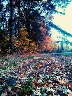 Jesień - autumn :-) colors