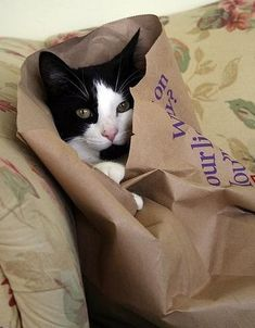 Cats are known for being stealth, but these pictures suggest otherwise. We expect this of dogs — but cats?? FOR SHAME.