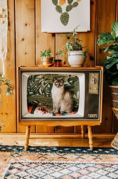 Mid Century Cat Bed - I made a bed for my cat out of an old TV! Photo by Jess Woodhouse Photography Portland, OR -