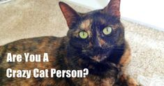 10 Signs You Are A Crazy Cat Person (And Proud Of It!) | The Animal Rescue Site Blog