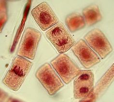 cells and other pictures