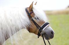 Fotoshooting mit Haflingerstute Gracia Portrait, Horses, Photography, Animals, Photoshoot, Animales, Animaux, Men Portrait, Portrait Illustration