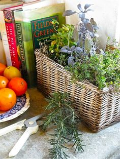 kitchen windowsill herb basket
