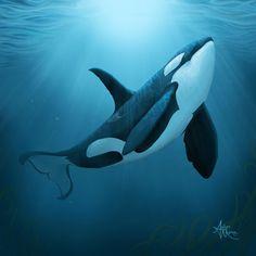 Killer Whale  _Orca