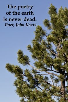 """""""The poetry of the earth is never dead.""""  John Keats -- Examine 40 intriguing quotes on creative inspiration at  http://www.examiner.com/article/forty-quotations-for-writing-inspiration"""