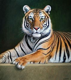 National animal of tiger hd wallpaper picture collection Tiger Drawing, Tiger Painting, Tiger Art, Big Cats, Cool Cats, Cats And Kittens, Animal Paintings, Animal Drawings, Beautiful Cats