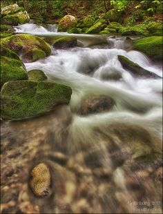 Rapids from within the Great Smoky Mountains National Park. I cant wait to go back!
