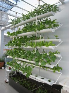 Hydroponics   2011/10 Photo: Hydroponics   2011/10 This Photo Was Uploaded. Hydroponic  GrowingHydroponic GardeningBackyard ...