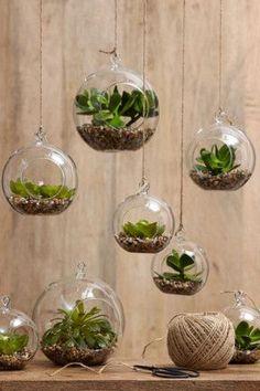 Für einen kleinen Garten im Bad? Dann lege ich mir viele, viele verschiedene #Sukkulenten zu!