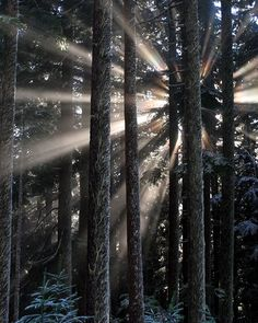 ~~Call of the Raven ~ backlit afternoon sun rays create the mood in this misty forest by Walkabout Wolf~~