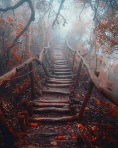 Forest path, Taiwan