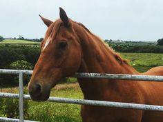 Summer has been good to this handsome orange boy Horse Photos, Horse Pictures, Animal Pictures, All The Pretty Horses, Beautiful Horses, Animals Beautiful, Pretty Animals, Cute Funny Animals, Cute Horses