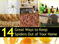 Spiders are something most people are not crazy about and they certainly do not want them in their home.  http://www.tipsbulletin.com/14-great-ways-to-keep-spiders-out-of-your-home-naturally/