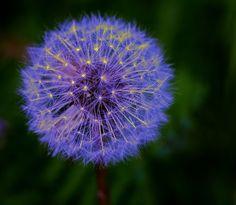 "500px / Photo ""Sparkler…."" by Finn Mouridsen.  Cool Dandelion"