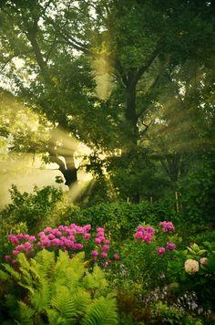 That Garden by Astranat on DeviantArt