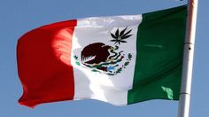 ¿México está poniendo fin a la guerra contra el Cannabis? Parece que, en México, se están dando pasos importantes hacia la legalización del cannabis. Por primera vez en la historia, la feria del cannabis EXPOWEED se celebraba en el Cent...