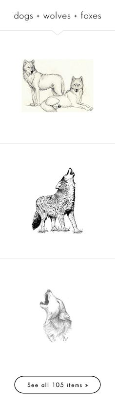 """""""dogs + wolves + foxes"""" by pantherinae on Polyvore featuring fillers, animals, drawings, art, wolf, sketches, doodles, scribble, saying and quotes"""