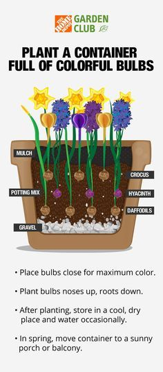 Fill containers with layers of yellow daffodils, fragrant purple hyacinth and perky crocus and let rest all winter long before sunny days wake up the bulbs in early spring. Read more at The Home Depot's Garden Club.