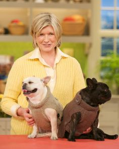 Martha Stewart's French bulldogs, Sharkey and Francesca (with free #knit sweater pattern)