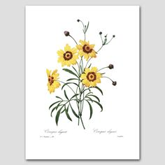Farmhouse Chic Yellow Coreopsis Botanical от ParagonVintagePrints