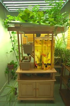 Brilliant Indoor Aquaponics System to Beautify Your Entire House - GoodNewsArchitecture plants indoor aquaponics system Brilliant Indoor Aquaponics System to Beautify Your Entire House - GoodNewsArchitecture Aquaponics System, Aquaponics Greenhouse, Backyard Aquaponics, Aquaponics Plants, Hydroponic Gardening, Organic Gardening, Indoor Gardening, Build Your Own House, Plant Growth