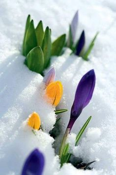 Reminds me of winter to spring in Canada :-)