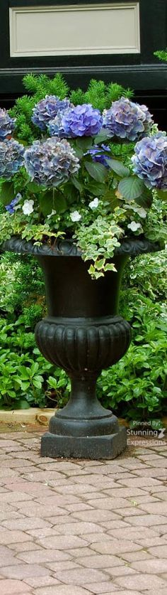 Container Garden – Pot gardening is the practice of growing plants, including edible plants, exclusively in containers instead of planting them in the ground. Garden Urns, Garden Planters, Container Plants, Container Gardening, Garden Inspiration, Garden Ideas, Edible Plants, Outdoor Planters, Cool Plants