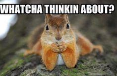 Just squirrel stuffs  @Amber McDonald