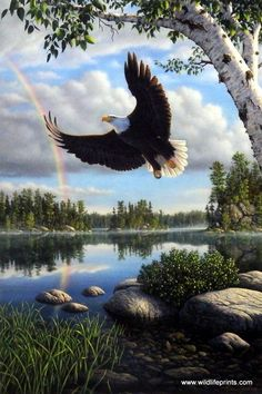 An eagle soars low to the ground of this beautiful bay overlooking a glorious rainbow in Kim Norlien's On Eagle's Wings.