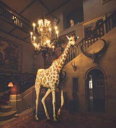 "Saatchi Art Artist Miss Aniela; Photography, ""Giraffe & Chandelier, Small - Limited Edition 4 of 15"" #art"
