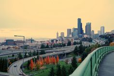 Fiery stand of orange red trees, if you are going to run away, use these curves, Seattle, Washington, USA