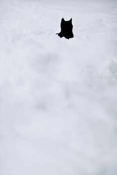 #cat #snow #black