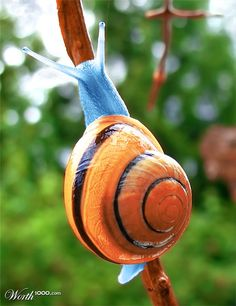 how long do snails sleep ? amazing photos and pictures of snails and shells.