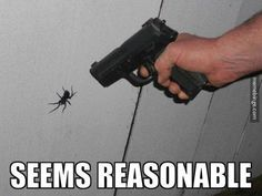 seems reasonable #funnyspider #lol