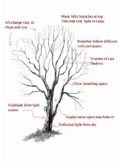 WetCanvas: Tutorials Archive: Landscapes: The Anatomy of a Winter Tree