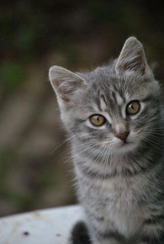 Cat Care Kittens Want more cute kittens? Click the photo for more! Cute Kittens, Cats And Kittens, Pretty Cats, Beautiful Cats, I Love Cats, Crazy Cats, Stuffed Animals, Gatos Cats, Photo Chat