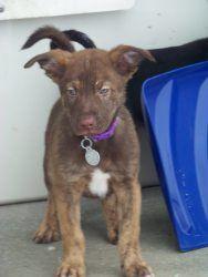 Casper: Husky, Dog; Elkhart, IN